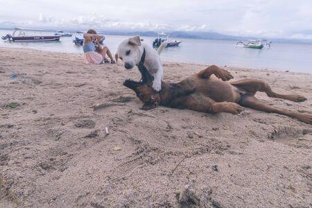 nusa: Street dogs playing on the beach of Nusa Lembongan island, Bali, Indonesia. Stock Photo