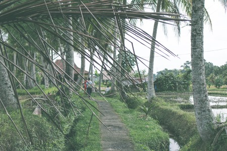 dirtied: Rice field on a tropical island of Bali. Asian green terrace land. Stock Photo