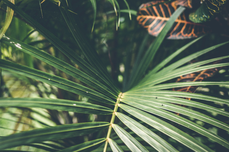 Creative tropical green leaves layout. Tropical palm background.
