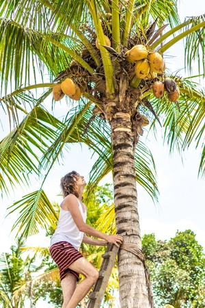 Young european man climbing on coconut palm. Bali island. 写真素材