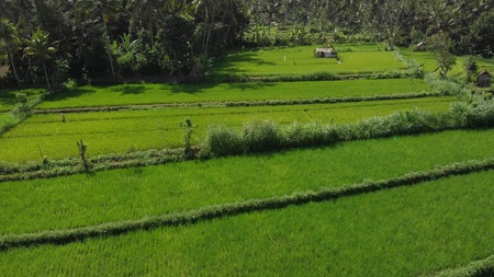 4K aerial flying video of green rice fields close to volcano Agung, Bali island. Indonesia.