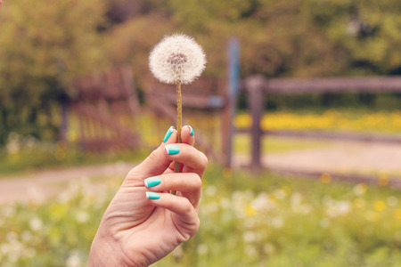 Young woman hand with dandelion on a nature background at spring time. Light and cute background. Imagens