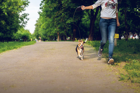 Girl running with her cute female beagle dog in the park at summer time. Lifestyle photo.