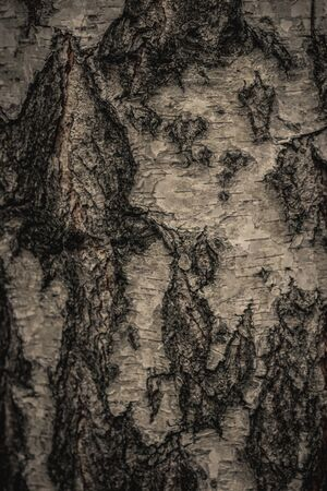 Close up nature view of bark tree on blurred texture in forest, wallpaper concept. Tree.