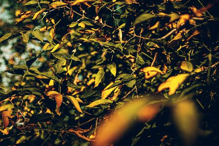 Colorful and wet fallen leaves in autumn season. Autumn background. Yellow fall.