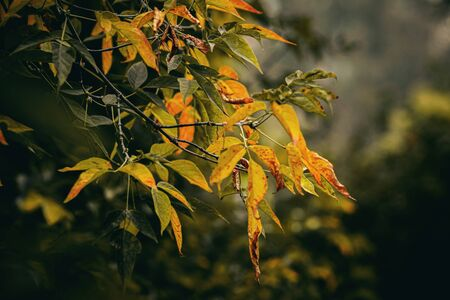 Collection of Beautiful Colorful Autumn Leaves. Nature background. 版權商用圖片