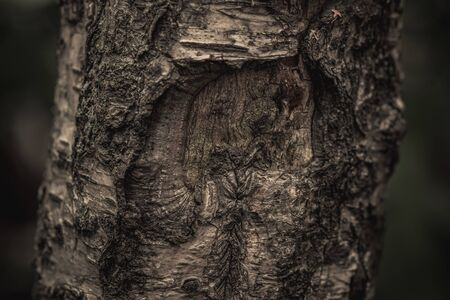 Close up nature view of bark tree on blurred texture in forest, wallpaper concept. 写真素材