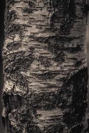 Close up nature view of bark tree on blurred texture in forest, wallpaper concept. Stockfoto