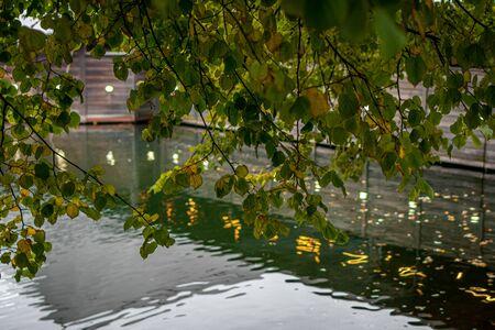 Autumn forest lake reflection landscape. Autumn pond. Fall nature landscape. 版權商用圖片