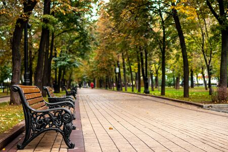 Bench in the autumn park. Fall park background. Beautiful nature.