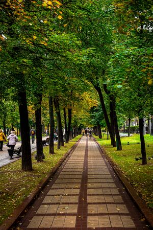Beautiful autumn park. Autumn in Moscow. Fall trees and leaves. Autumn Landscape. Park in Autumn. Forest in Fall.