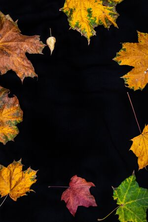 Fall leaves on a solid black background. Autumn scene. Stockfoto