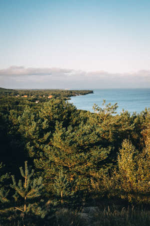 Vertical panorama of pine trees and coastline. Beautiful nature background.