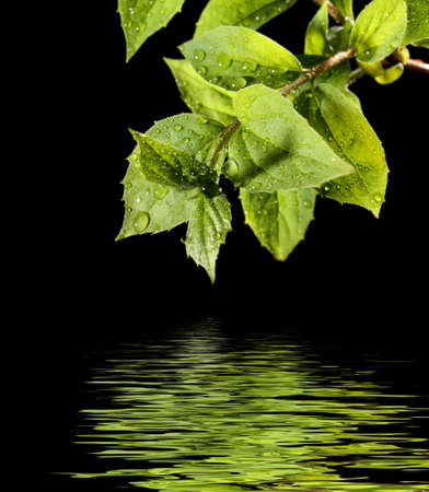 green leaf with water drops Stock Photo - 6197229