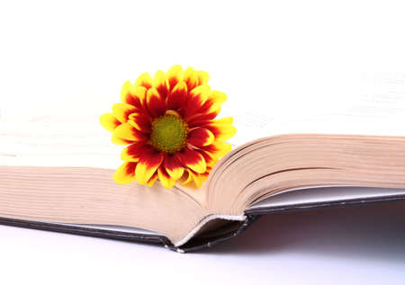 open book with flower on white photo