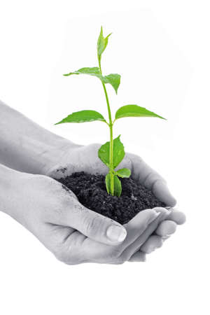 Human hands hold and a young plant photo