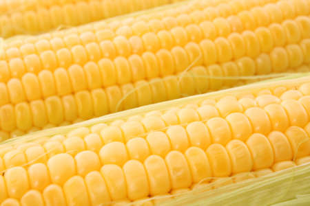 Yellow corns background photo
