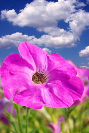 Violet flower on the blue sky background Stock Photo - 6260121
