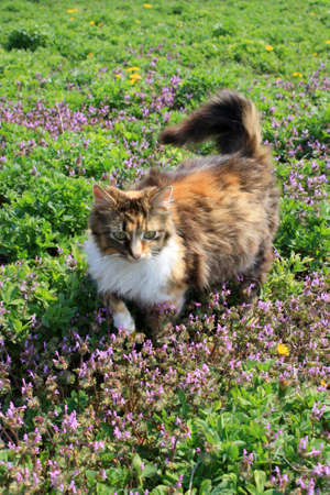 usual: fluffy cat on the flowers