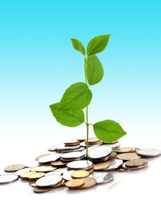 Coins and plant isolated on white background Stock Photo - 6281984