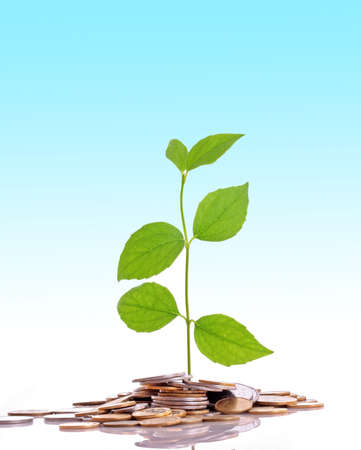 Coins and plant, isolated on blue background photo