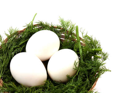 sheltering: eggs in the nest isolated