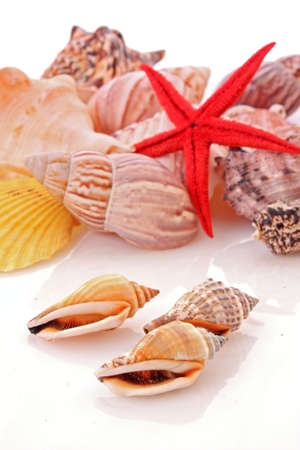 Shells isolated on a white background photo