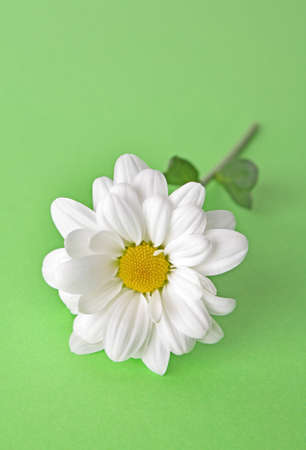 White camomile on green background Stock Photo - 6333208