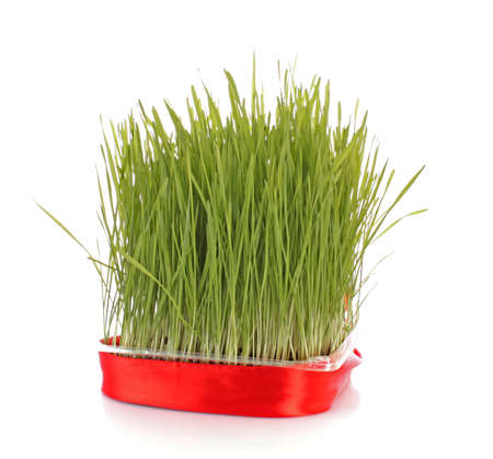 Isolated green grass on white background photo