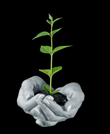 black seeds: Young plant in hand on black background Stock Photo