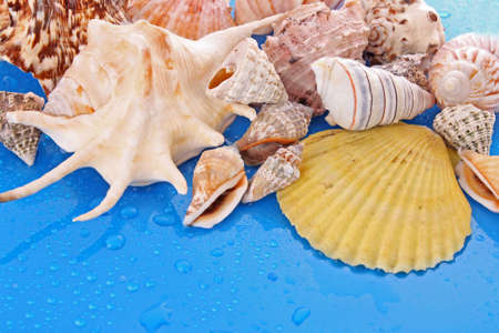 Shells on blue background with water drops photo
