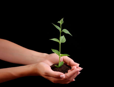 Young plant in hand on black background Stock Photo - 6605978