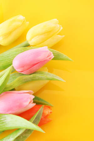 Many colorful tulips on the color  background photo