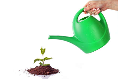 water can: Green sprout on  white background Stock Photo
