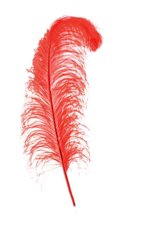 Big red feather on white background photo