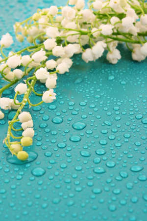 lily of the valley: Lily-of-the-valley  on blue