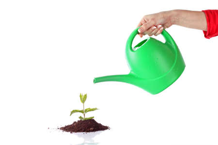watering can: Green sprout on  white background Stock Photo