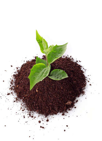 Young plant in ground over white background Stock Photo - 7383805