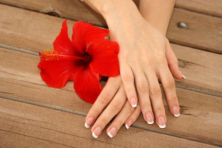 nail care: Woman hands with french manicure holding red flower
