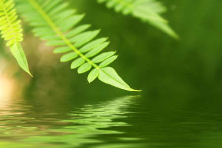 Green leaves background Stock Photo - 8140784