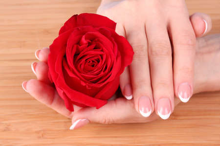 Woman hands with french manicure holding red rose photo