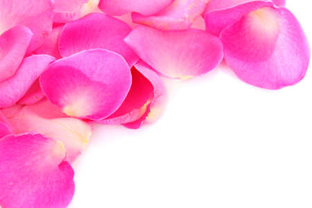 rose petals on white photo