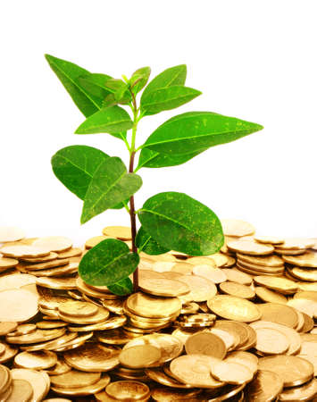monetary concept: coin money with green leaf growing