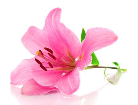 白地にユリの花