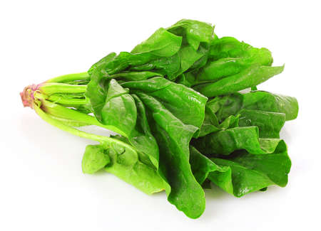 Bunch of spinach isolated on white background photo