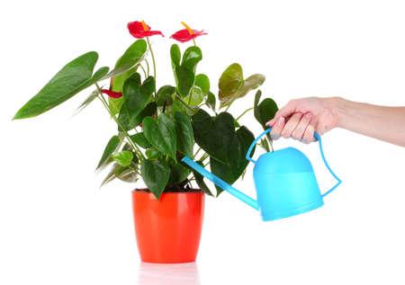 replant: Mano di donna acque fiori