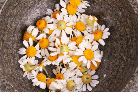chamomile flowers in  mortar photo