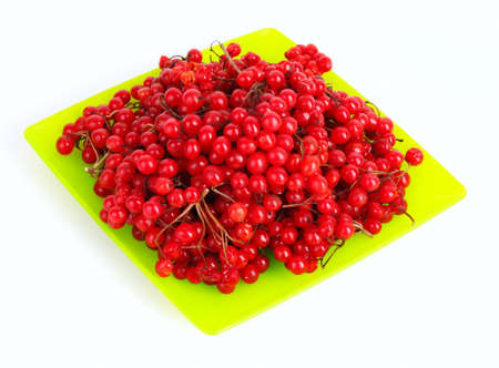 guelder rose berry: red berries of viburnum isolate on white