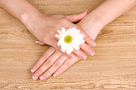 womens hands and chamomile flower on wooden background photo