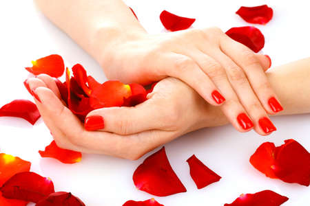 beautiful womans hands and rose petals isolated on white photo